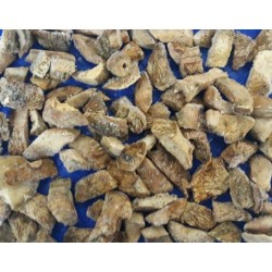 Fungo Sanguinaccio Lactarius deliciosus 1X10KG SURGELATO